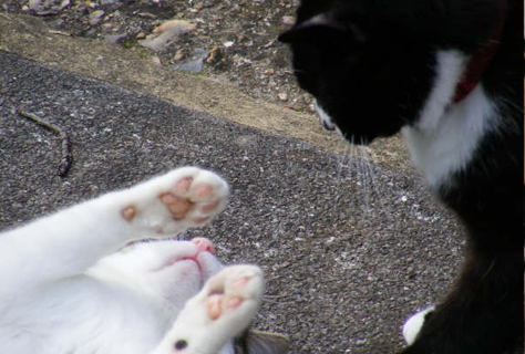cattery - cats playing