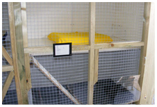 Cattery Cat Pen
