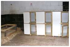 Cattery Rabbit Hutch Enclosure